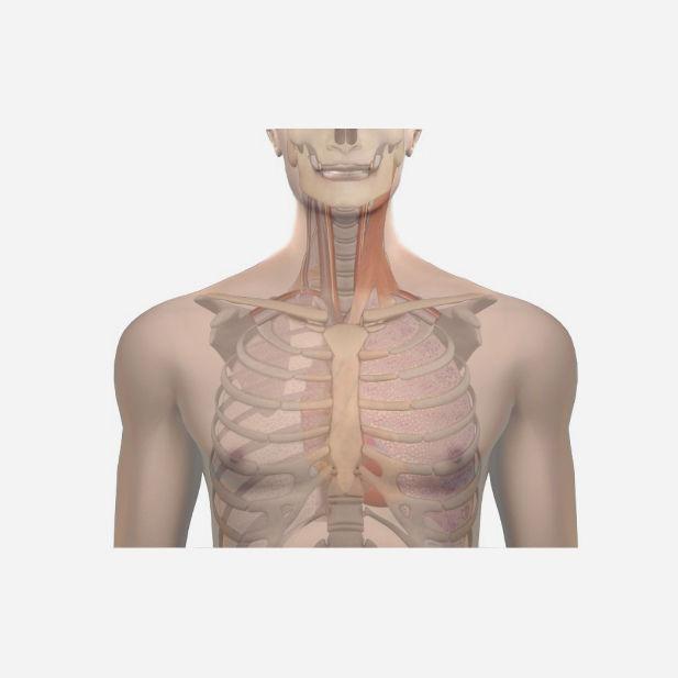 Central Venous Catheterization Simulation Module Web Based