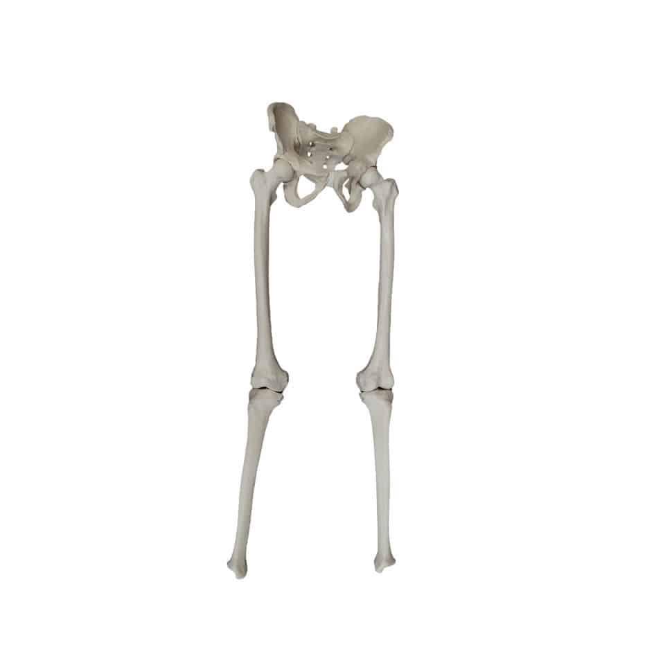 Pelvis Model Hip Skeleton Tibia 2043 Nacional Ossos