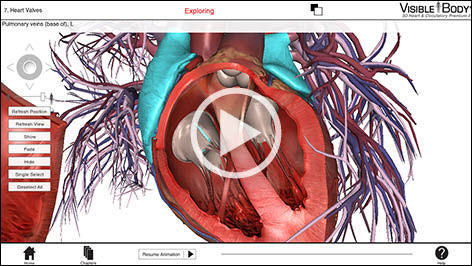 Education Software 3d Viewing Anatomy Heart Circulatory
