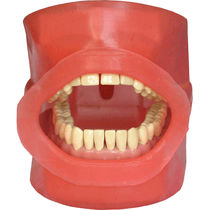 Dental patient simulator / mouth