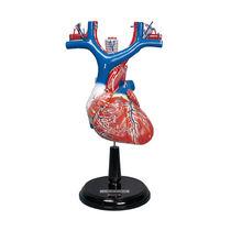 Heart model / for teaching
