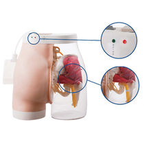 Buttock model / intramuscular injection / semi-transparent