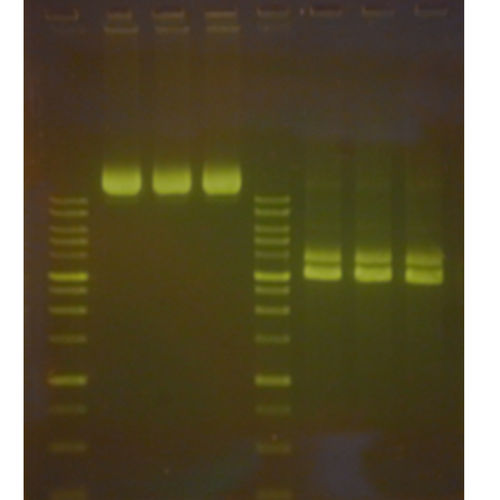 electrophoresis reagents / stain