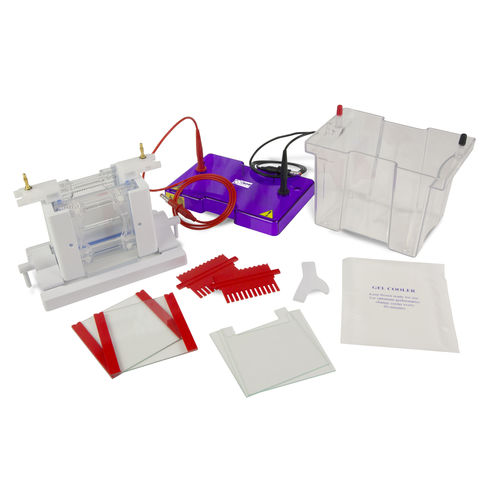 protein electrophoresis system / vertical / bench-top