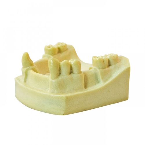 mandible model / for teaching / for implantology
