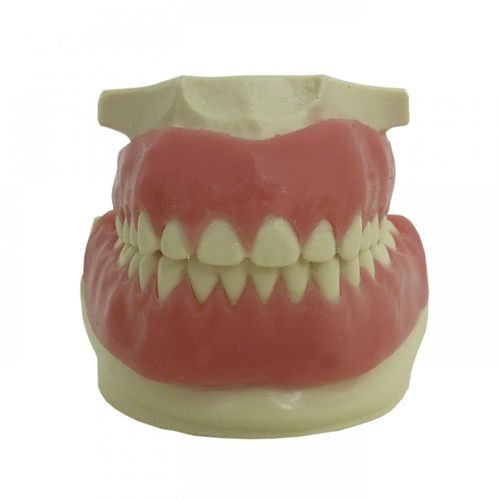 denture model / gingival / suture / for orthodontics