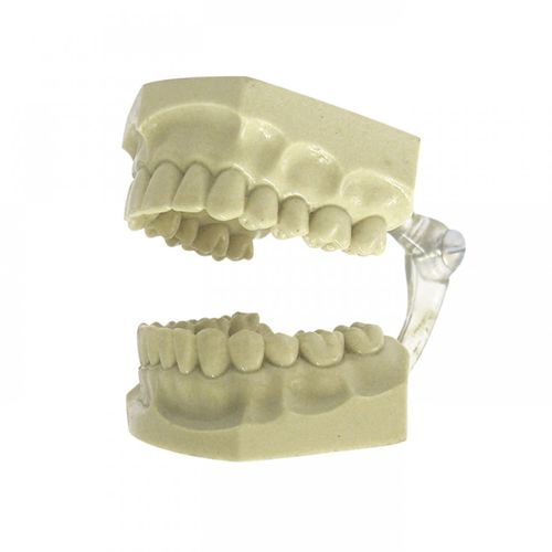denture model / for orthodontics / training / articulated