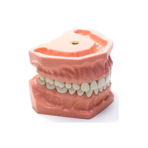denture model / training