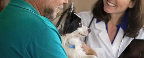 management software / training / veterinary / for veterinary facilities