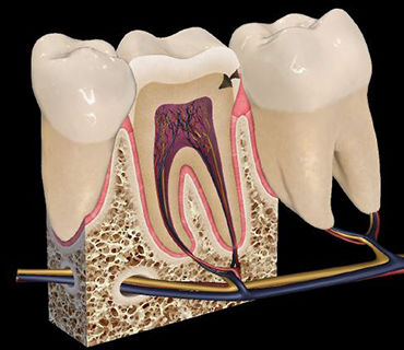 3D viewing software / education / for orthodontics / surgery