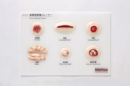 Skin anatomical model / for teaching / pathological M194 Sakamoto Model Corporation