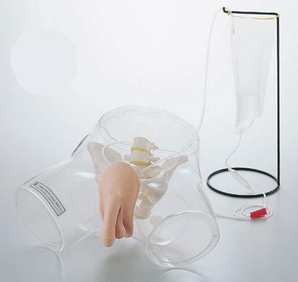urinary catheterization simulator / male / pelvis