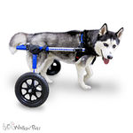 passive wheelchair / outdoor / for dogs