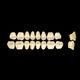 acrylic dental prosthesis / posterior teeth