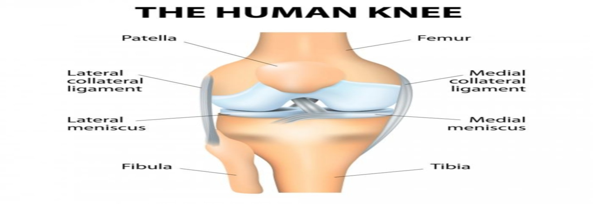 a086c6716c Crepitus of the Knee: Creaky Bones or Something More? - United States