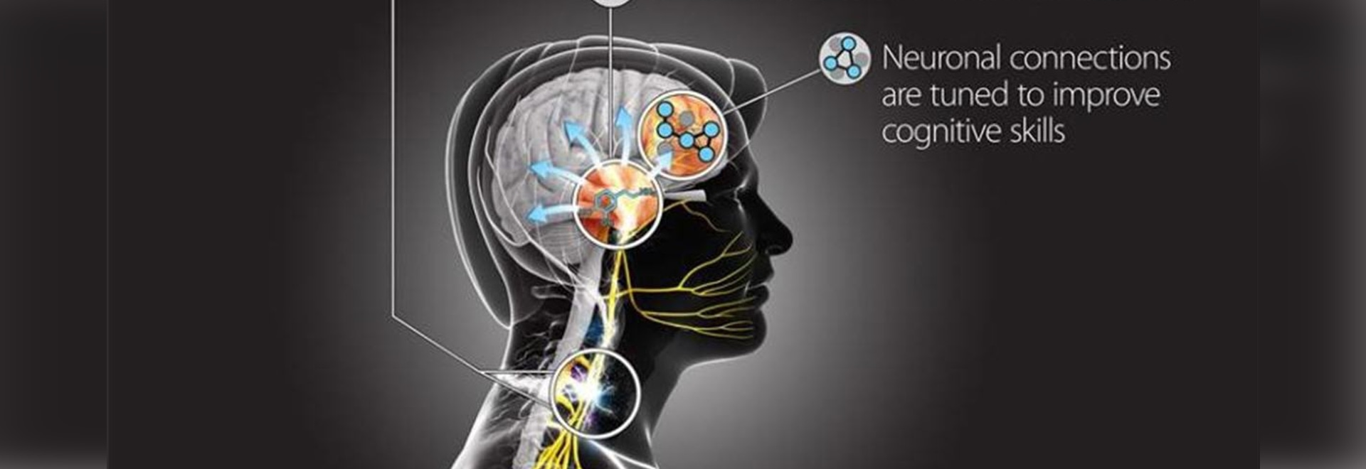 DARPA Funds Brain-stimulation Research to Speed Learning