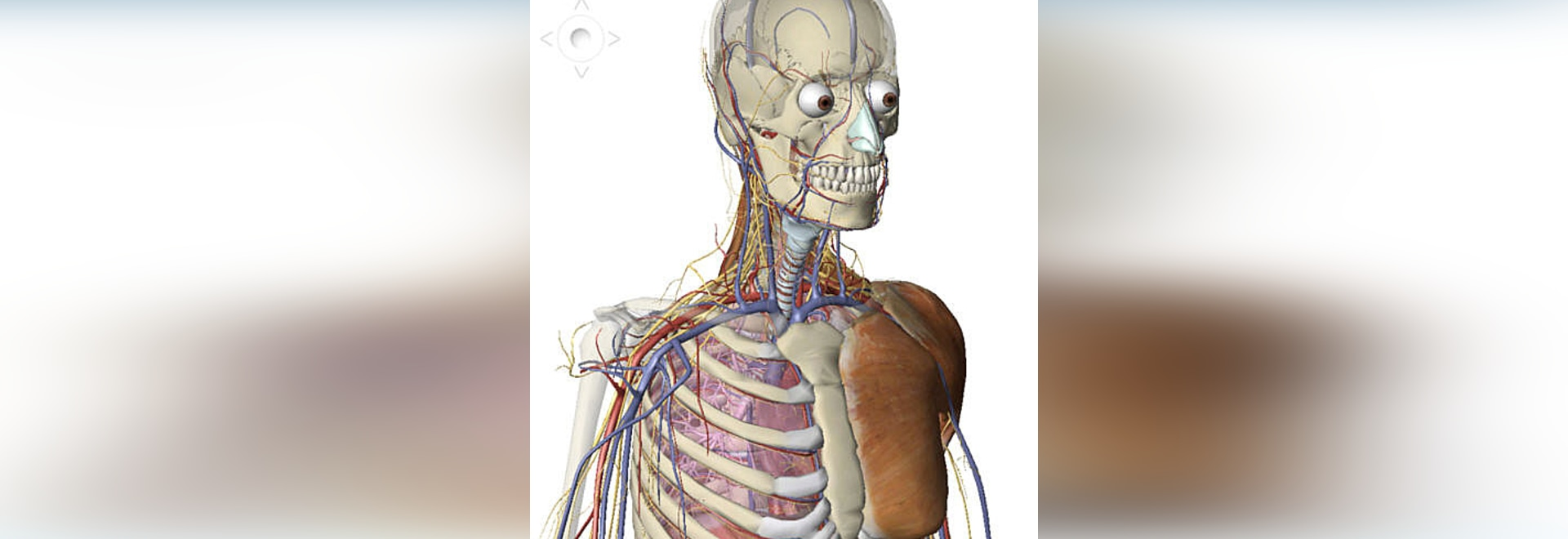 New Visible Bodys Human Anatomy Atlas By Visible Body Visible Body