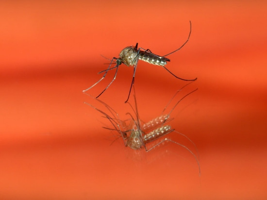 When will dengue turn life-threatening? Researchers identify genes that provide a tell