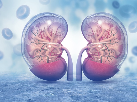Kidney Disease Vulnerable to Targeted Nano Therapy