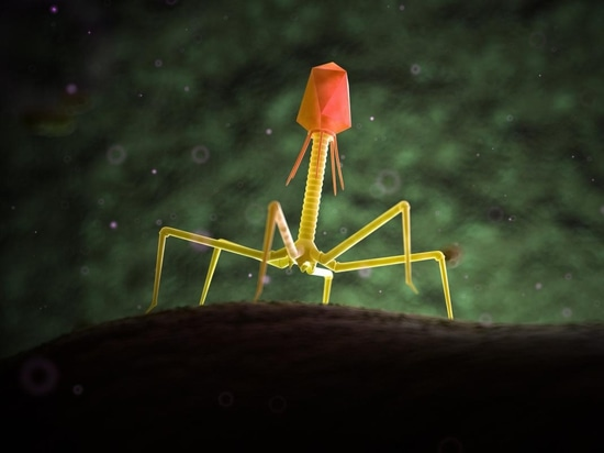 Bacteriophages (depicted above) are viruses that can infect and destroy bacteria. Could they hold the answer to antibiotic resistance?