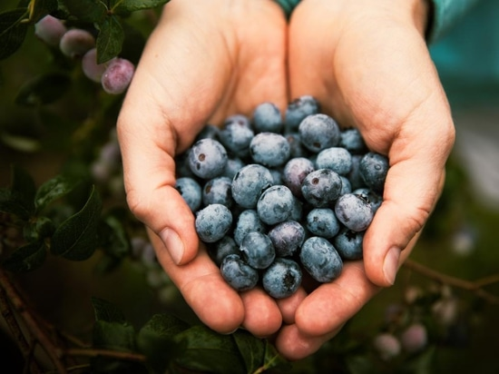 Blueberries are tasty, but are they good for our hearts?