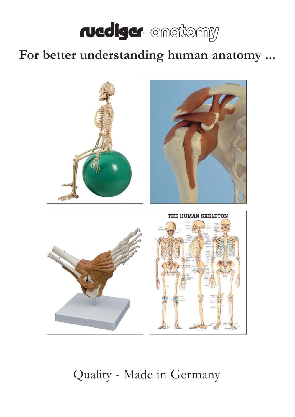 For Better Understanding Human Anatomy Rdiger Anatomie