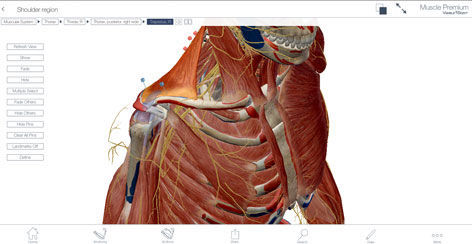 Education software / 3D viewing / anatomy Muscle Premium Visible Body
