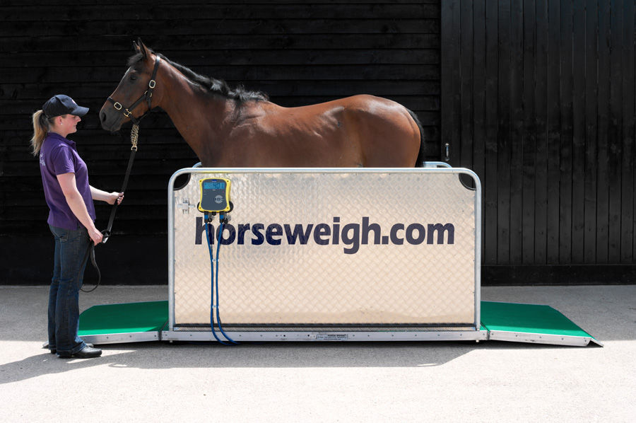 Electronic veterinary weighing scale / for horses / with mobile display /  platform Olympic Horse Weigh