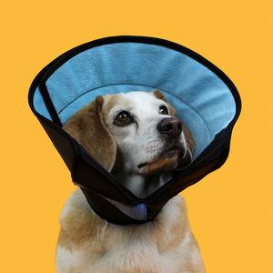 dog veterinary collar