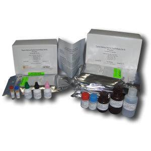 infectious disease test kit / for anemia / for equines / for antibodies
