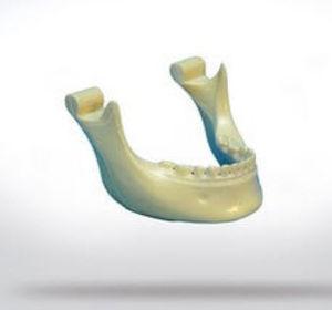 bone model / mandible / for teaching / orthopedic surgery