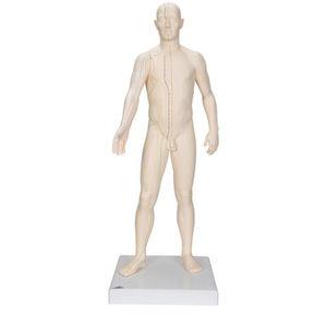 whole body anatomical model