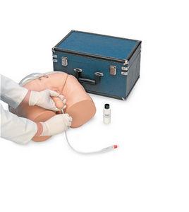urological care training manikin / catheterization / male / pelvis