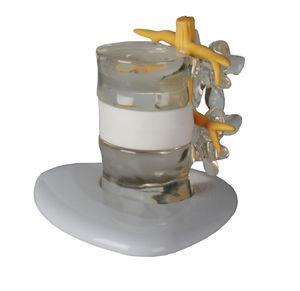 vertebra model