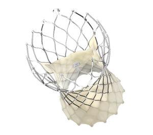 aortic valve bioprosthesis