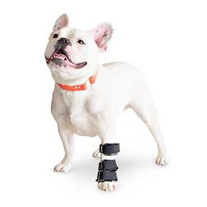 carpal tunnel veterinary splint