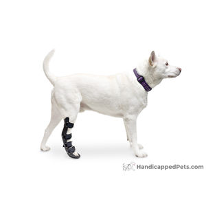 paw veterinary splint