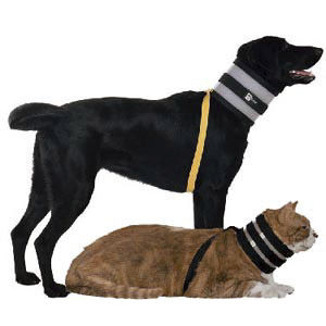 dog veterinary collar