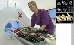 veterinary CT scanner / for small animals