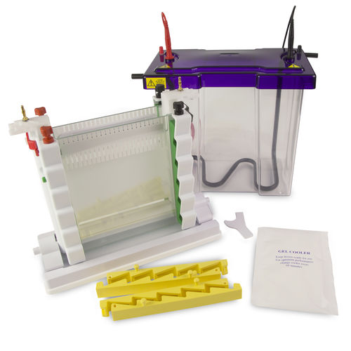 vertical electrophoresis system / bench-top