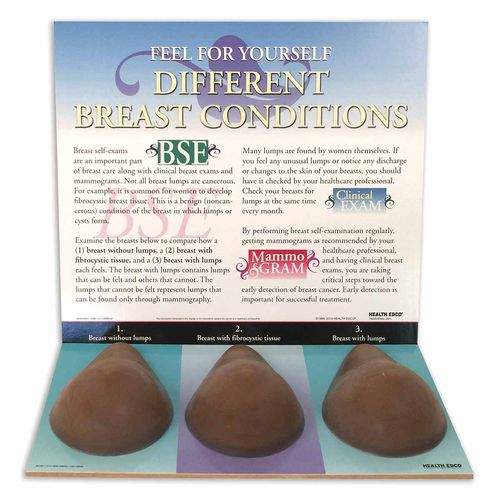 breast palpation simulator / breast
