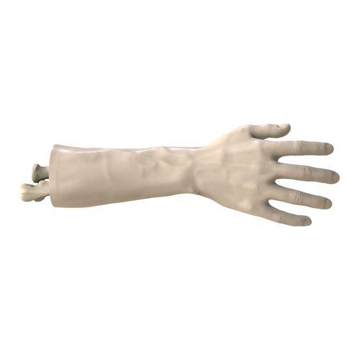 wrist model / hand / for teaching