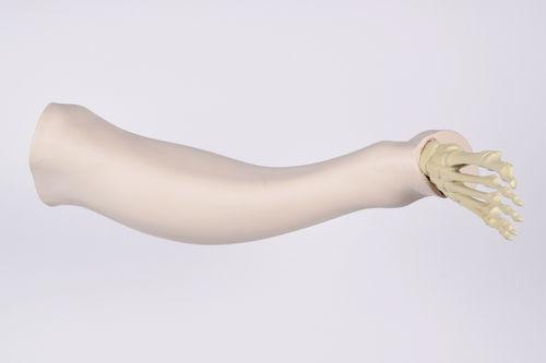 leg model / for teaching