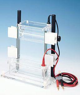 DNA electrophoresis system