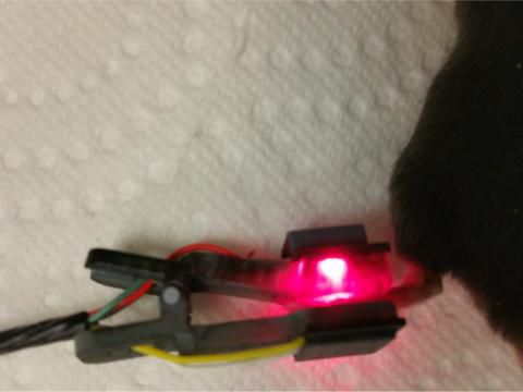 temperature sensor / vital sign / for animal research