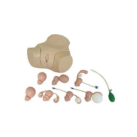 training simulator / gynecological care / female / pelvis