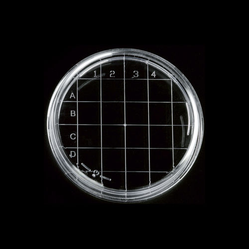 Petri dish with counting grid