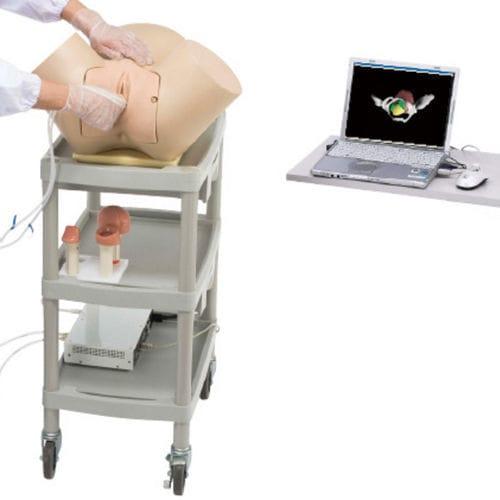 gynecological care simulator / pelvis / virtual reality