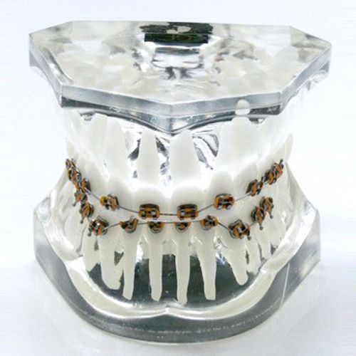 denture model / for teaching / for orthodontics / transparent
