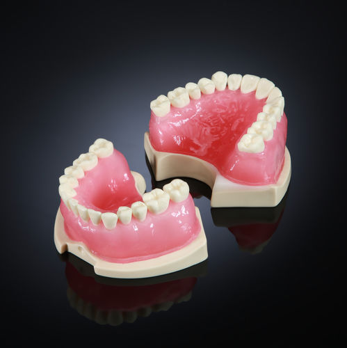 denture model / for teaching / for endodontics